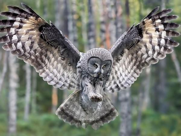 1372603733_Owl6